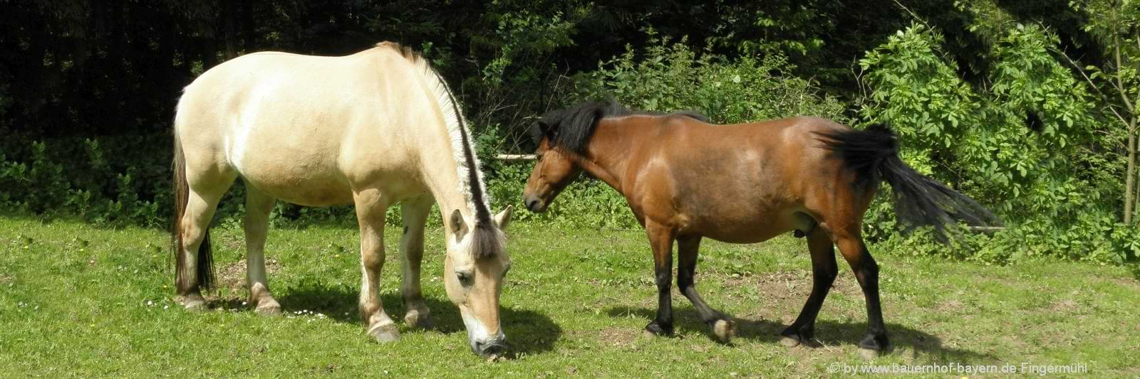 Kinderbauernhof im Bayerischen Wald mit Hasen, Hühnern und Pony Max
